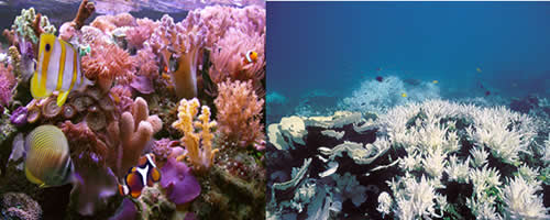 Os corais do planeta estão ficando brancos e morrendo em razão do aumento de gás carbônico na atmosfera