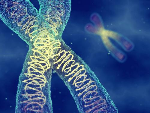 Os cromossomos podem sofrer com alterações numéricas e estruturais