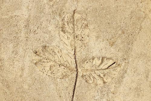 Os fósseis são importantes evidências do processo evolutivo
