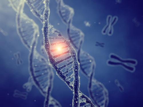 Os genes são as unidades responsáveis pela hereditariedade