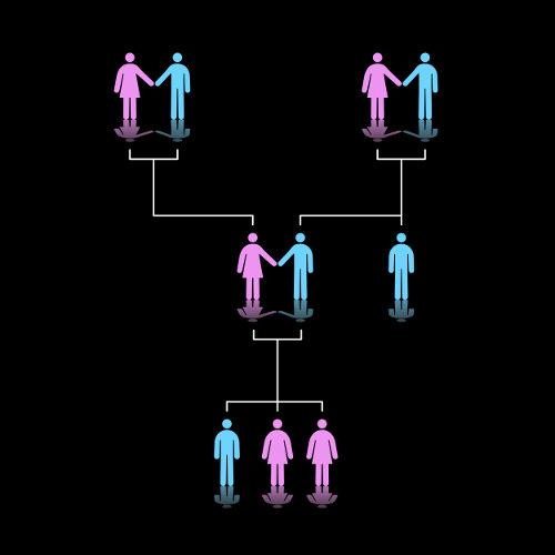 Os heredogramas mostram as relações de parentesco entre os indivíduos