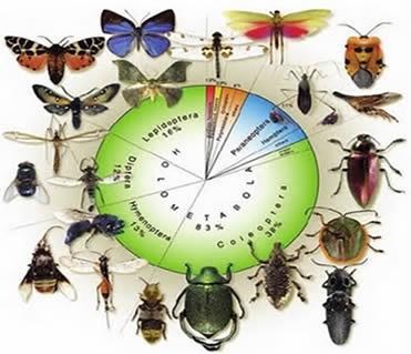 Os insetos pertencem ao Filo Artropoda