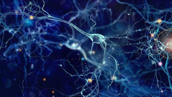 Os neurônios são células típicas do sistema nervoso