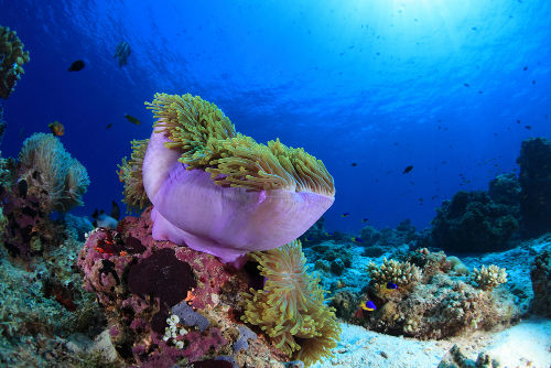 Os organismos que são encontrados fixos no fundo do mar são exemplos de bentos