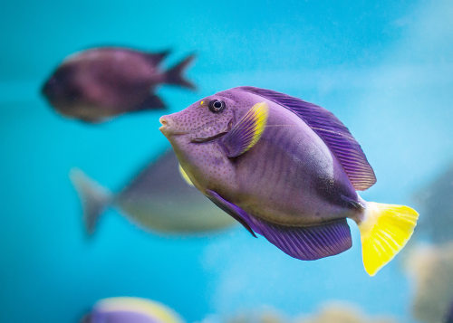 Os peixes apresentam importantes características que permitem seu desenvolvimento no ambiente aquático