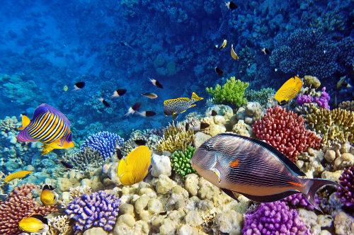 Os peixes apresentam mecanismos que garantem a quantidade adequada de sais no organismo