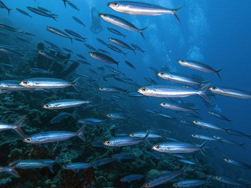 Os peixes são animais que apresentam capacidade de nadar contra a correnteza