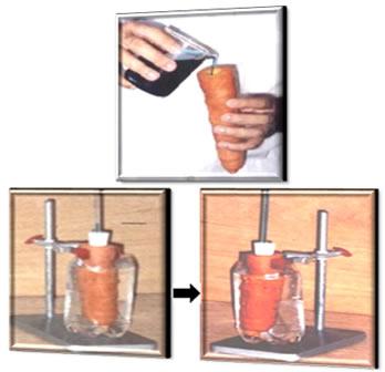 Experimento de osmose em cenoura
