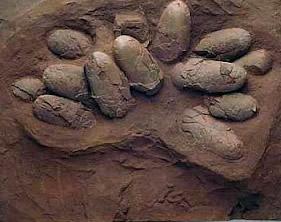 Ovos de dinossauro fossilizados
