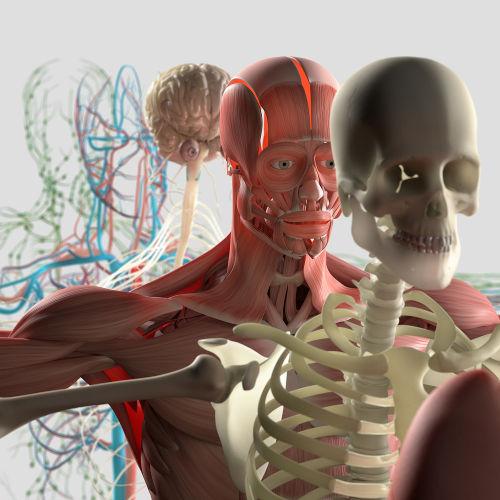 Para que o organismo funcione adequadamente, ele deve estar em homeostase
