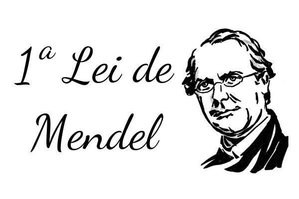 A primeira lei de Mendel é também conhecida como Princípio da Segregação dos Caracteres.