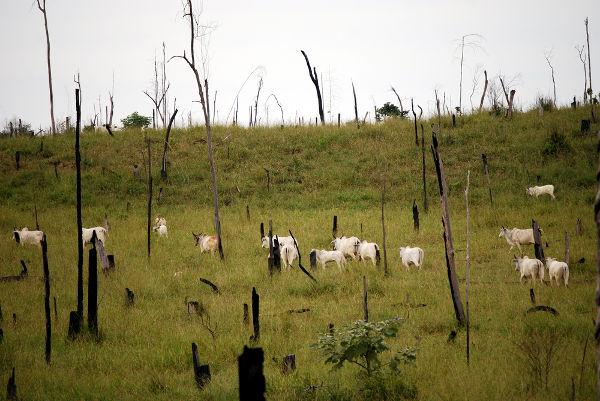 Área de vegetação florestal desmatada para formação de pastos