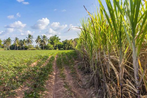 A rotação de culturas é uma prática agrícola que visa à alternância de culturas a fim de preservar o solo.
