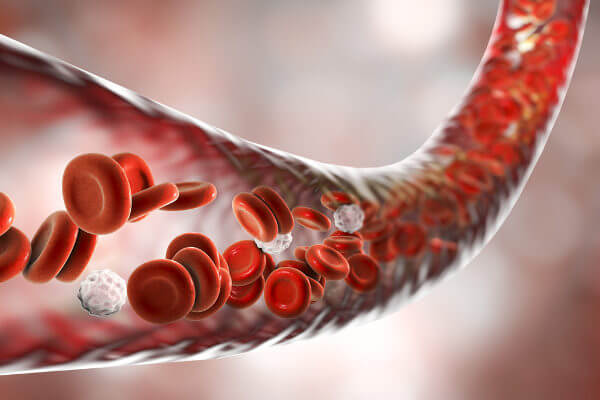 O sangue é um tipo de tecido conjuntivo que circula através dos vasos sanguíneos.