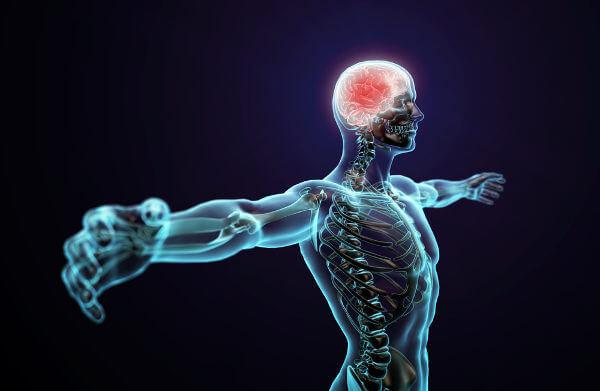 O sistema nervoso garante que nosso corpo seja capaz de responder a estímulos externos e internos.