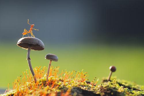 Tanto a formiga quanto o cogumelo são exemplos de seres vivos