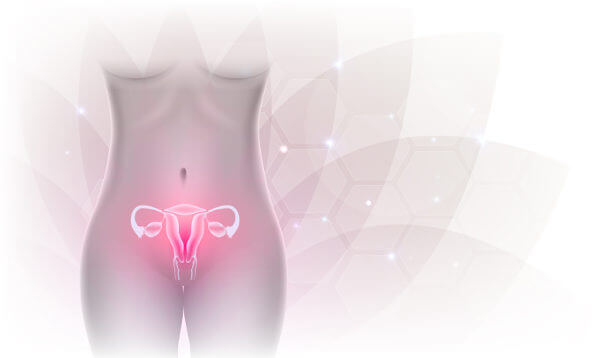 O útero é o órgão do sistema reprodutor feminino em que o bebê desenvolve-se.