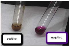 Teste de Bayer