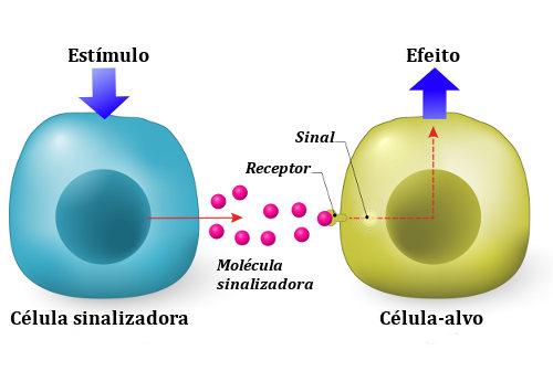 Uma célula libera uma molécula sinalizadora que segue em direção à célula-alvo