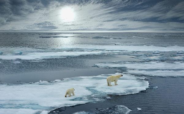 O urso-polar, classificado como vulnerável, é um animal que pode sofrer as consequências das mudanças climáticas.