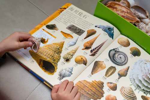 Utilizar estruturas como conchas na aula facilita a identificação do grupo de moluscos estudado pelos alunos.