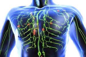 Vasos e nódulos do sistema linfático.