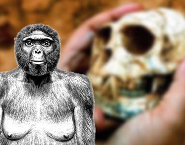 Ardi promove uma verdadeira reviravolta nos estudos sobre a evolução das espécies