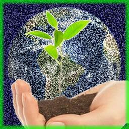 Não basta plantar, temos que preservar!