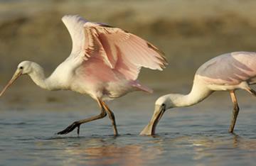 Abrangência evolutiva com foco na locomoção das aves