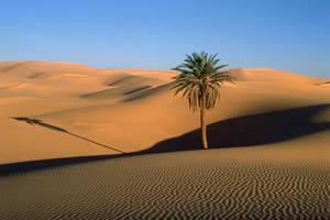 Exemplo de Deserto