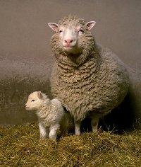 Dolly, o primeiro mamífero clonado