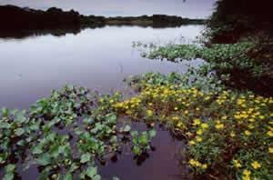 O ecossistema do Pantanal Mato-Grossense