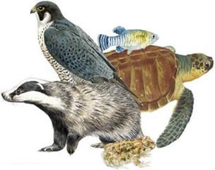 Os vertebrados: Condricthyes, Osteicthyes, Amphibia, Reptilia, Aves e mamíferos