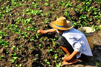 A Reforma Agrária visa a alcançar as diversas famílias que precisam de um pedaço de terra para cultivar seu alimento.