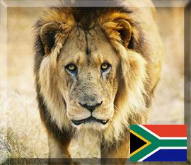 As belezas sul-africanas estão em todas as partes