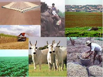 Conjunto de atividades vinculadas à agropecuária