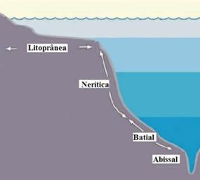 Zonas que compreendem o ambiente marinho
