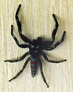 Aracnofobia: medo excessivo de aranhas