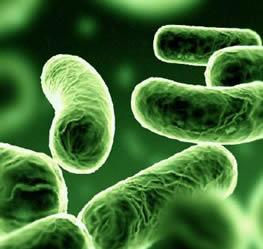 Saida,desespero,reencontro-os irmãos se encontram - Página 4 Bacteria5(1)