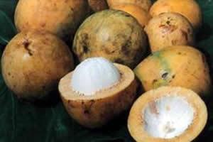 O fruto do bacuri tem o tamanho de uma laranja