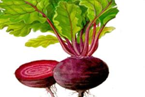 A beterraba é um vegetal rico em nutrientes