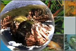 O planeta Terra abriga diferentes paisagens naturais