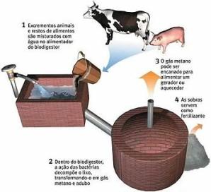 Esboço do processo de produção do biogás