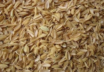 Casca de arroz, matéria-prima utilizada na fabricação de BTL