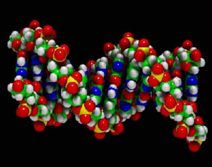 Alterações na molécula de DNA