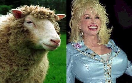 Ovelha Dolly recebeu esse nome como uma homenagem a cantora Dolly Parton