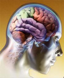 As drogas e o sistema nervoso.