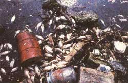 Rio Poluido com lixo sólido