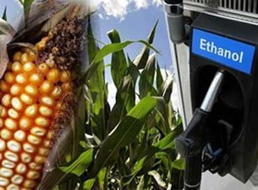 O milho e a cana-de-açúcar são utilizados na produção do etanol