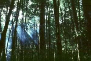 Interior de uma floresta equatorial